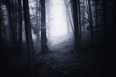 Griezelige achtervolgde bosweg met mist stock foto