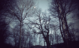 Griezelige bomen Stock Foto