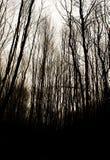 Griezelige Bomen Stock Foto's