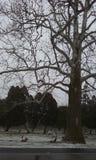Griezelige bomen Royalty-vrije Stock Foto's