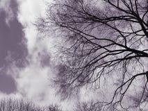 Griezelige bomen in hemel Stock Afbeelding