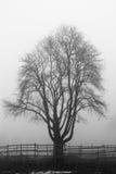 Griezelige boom Stock Afbeeldingen