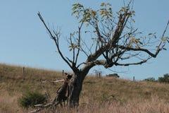 Griezelige boom die zich in geen bevinden waar Stock Foto's