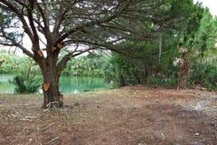 Griezelige boom door het water stock afbeelding