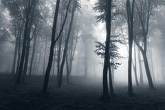 Griezelige donkere bomensilhouetten in vreemd mistig bos royalty-vrije stock foto