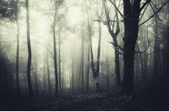 Griezelige Halloween-scène in achtervolgd bos stock fotografie