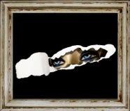 Griezelige mannequin Royalty-vrije Stock Afbeeldingen