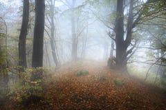 Griezelige mist in het bos Royalty-vrije Stock Foto's
