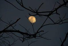Griezelige schaduw van dode boombladeren in de donkere nacht royalty-vrije stock foto