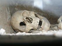 Griezelige schedel royalty-vrije stock foto's
