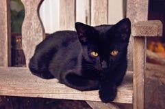 Griezelige Zwarte kat Stock Afbeeldingen