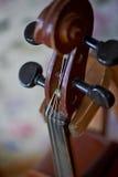 Grif gammal brun fiol Var på den ljusa bakgrundstapeten close Royaltyfri Bild
