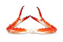 Griffe cuite de crabe d'isolement sur le fond blanc image libre de droits