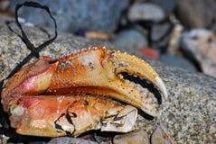 Griffe de crabe Photos libres de droits