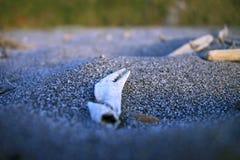 Griffe de crabe en sable Photographie stock