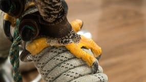 Griffe de faucons Photographie stock libre de droits