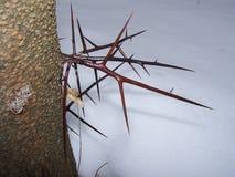 griffes d'arbre Images stock