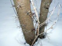 griffes d'arbre Photo libre de droits