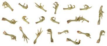 Griffes d'oiseau dans divers gestes Image libre de droits