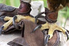 Griffes d'un aigle Photographie stock libre de droits