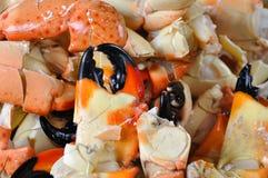 Griffes de crabe en pierre Photos stock