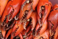 Griffes rouges de crabe Photographie stock