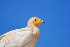Griffin on blue sky.  Royalty Free Stock Images