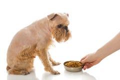 Griffon和干食物 免版税库存照片