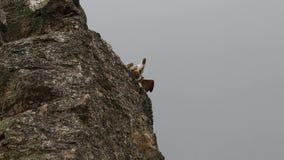 Griffon gam som bort flyger av Salto del Gitano, Spanien stock video