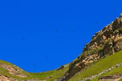The Griffon Vulture Gyps fulvus flies in the sky. Over the mountains in the North Caucasus in Russia stock image