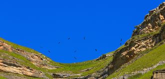 The Griffon Vulture Gyps fulvus flies in the sky. Over the mountains in the North Caucasus in Russia royalty free stock photography