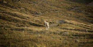 Griffonnage dans le domaine alpin Photographie stock libre de droits