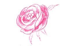 Griffonnage de Rose Images libres de droits