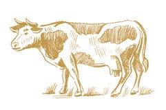 Griffonnage de vache sur le blanc Image stock
