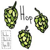 Griffonnage Sketsh d'houblon Illustration de vecteur de bière Photographie stock libre de droits