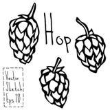 Griffonnage Sketsh d'houblon Illustration de vecteur de bière contour Photographie stock