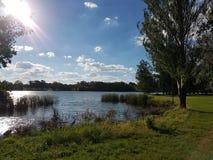 Grifo de Burley del lago Fotos de archivo libres de regalías