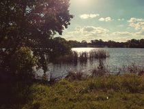 Grifo de Burley del lago imagenes de archivo