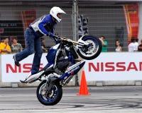 Grifo de Mattie que executa um wheelie Imagem de Stock Royalty Free