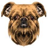 Grifone di Bruxelles della razza del cane illustrazione vettoriale
