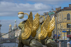 Grifoni sul ponticello della Banca a St Petersburg immagini stock