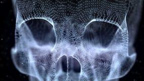 Griglia del cranio umano royalty illustrazione gratis