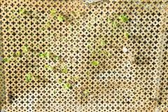 Griglia del metallo con le piante Immagini Stock