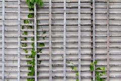 Griglia di bambù Immagini Stock