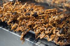 Griglia e scorpioni fritti sul bastone Fotografia Stock Libera da Diritti