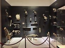 Grigore Antipa自然历史博物馆 免版税图库摄影