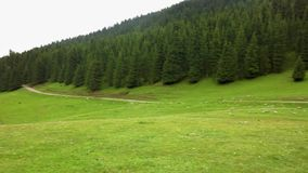 Grigorievka Glen Defile first lake. Surrounded by forest and tian shan mountain range stock video