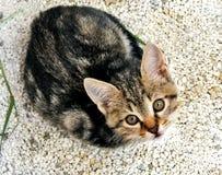 Grijs gestreept katje die omhoog op het grint kijken royalty-vrije stock foto's