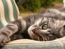 Grijs gestreepte katkatje op stoel stock foto's
