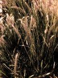 Grijs gras Stock Afbeeldingen